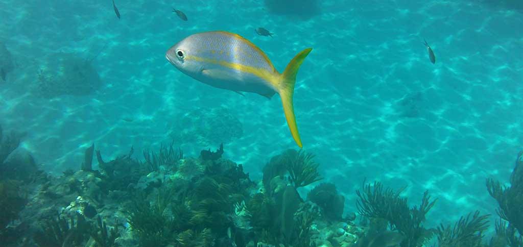 snorkeling_key_rv.jpg